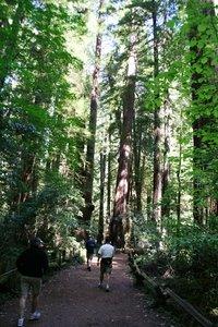 Armstrong Woods - California redwoods