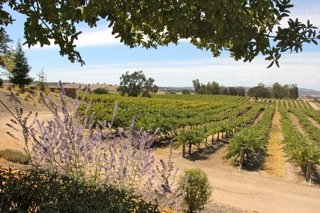 Paso Robles wine tours
