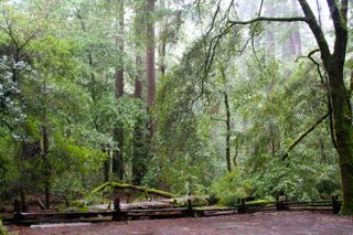 Big Basin Redwoods State Park
