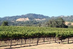 Alexander Valley Wineries