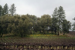 California Wineries - Calaveras County