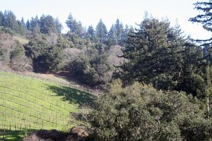 Santa Cruz Wineries - California Wine Tour