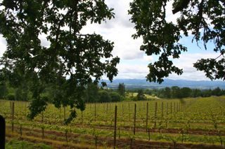 Dundee Hills Wineries