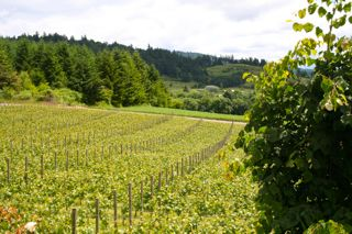 Willamette Valley Scene