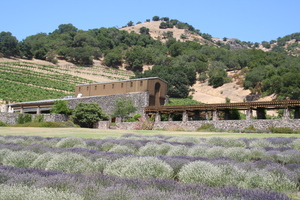 Robert Sinskey Vineyards