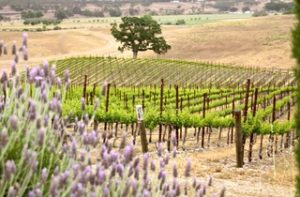 August Ridge - Paso Robles
