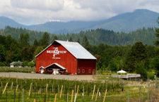 Oregon Wineries Waiting To Be Explored