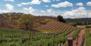Central Coast Wine Tasting Coupons