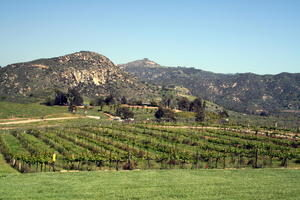 Vineyard San Diego