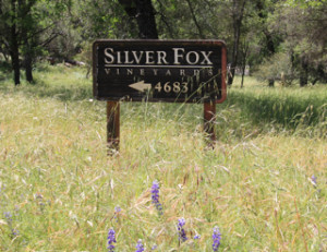 Silver Fox Vineyards