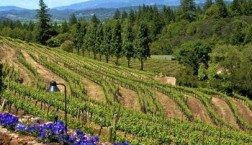 Sonoma County Wineries – Where Are the Best Tasting Rooms?