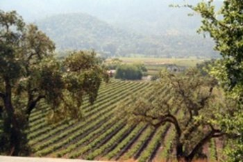 Yountville Wineries