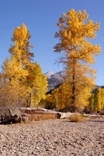 Fall Foilage Nevada