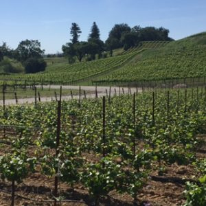 Healdsburg tours-stay-eat- have fun