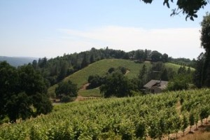 El Dorado County wineries