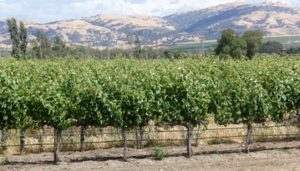Livermore Wine Country