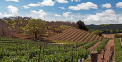 Wine line paso robles coupons