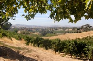 Paso Robles wine tasting coupons