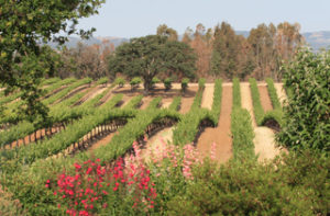 Robert Hall Winery Paso Robles