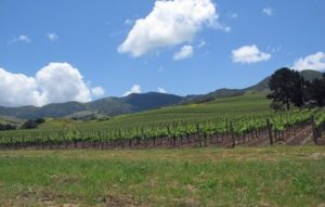 Santa Ynez wine country