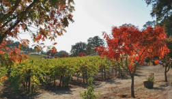 The Sierra Foothills – Incredible Wineries
